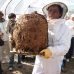【岐阜県ヘボ祭り】世界1危険な蜂祭り!内容やアクセス方法は?